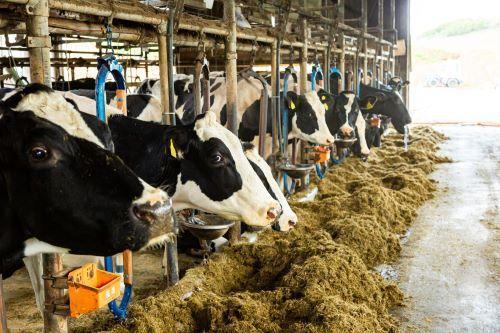 牧草は牛の主食に、麦稈や稲わらは寝床になりますよ